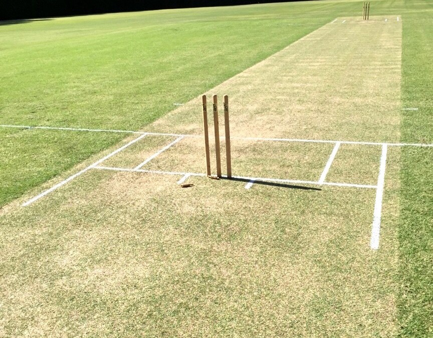 Turf Cricket Wicket Preparation and Maintenance