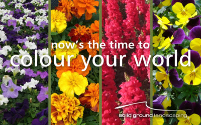 Annuals Planting Season is here!