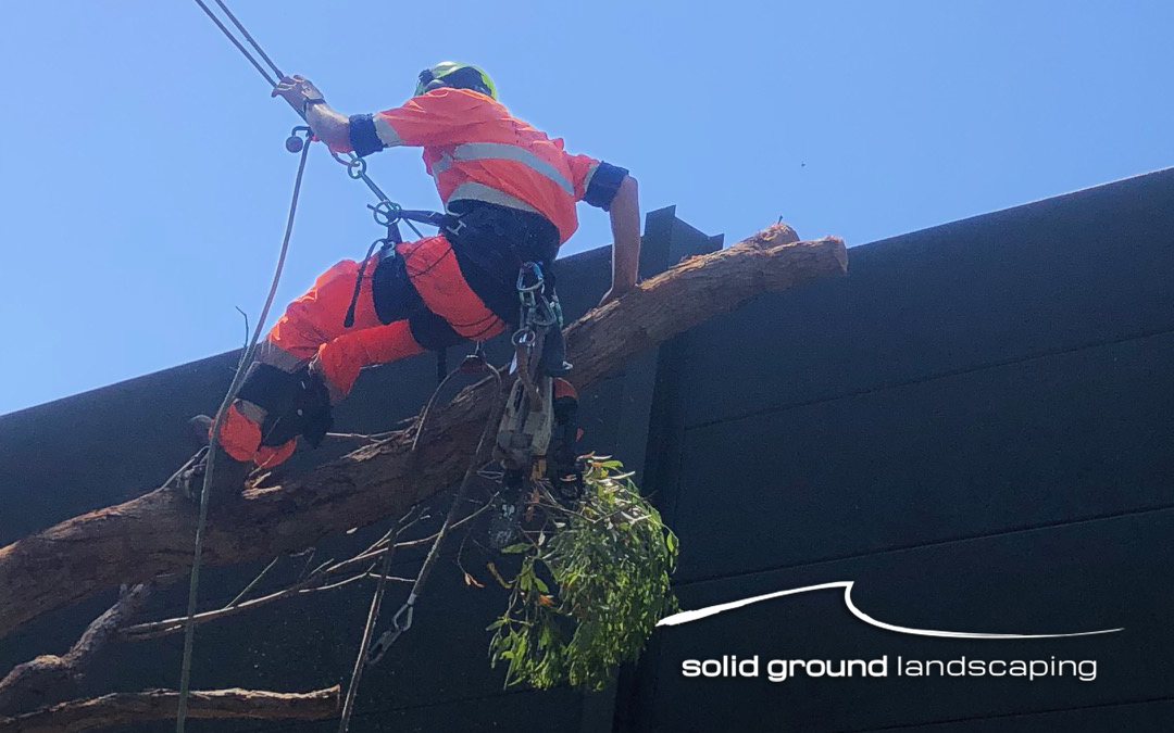 SGL Keeps Sydney Moving
